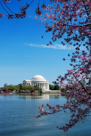 Jefferson national memorial with cherry blossom in Washington DC.