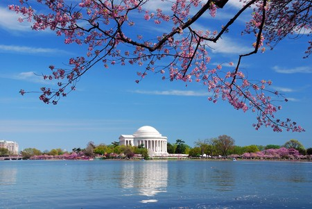 jefferson: Thomas Jefferson national memorial with cherry blossom in Washington DC.
