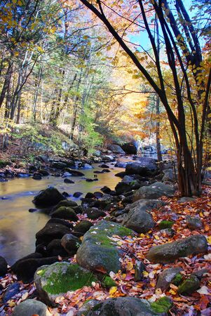 Autumn creek woods with yellow trees foliage and rocks in forest mountain. Stock Photo - 7530680