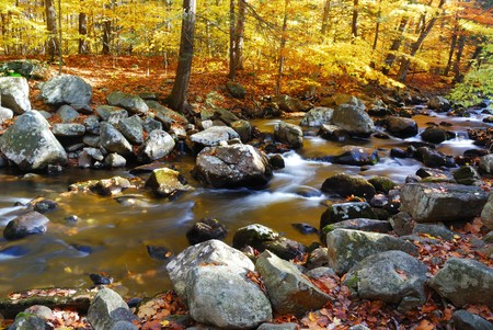 creeks: Autumn creek woods with yellow trees foliage and rocks in forest mountain. Stock Photo