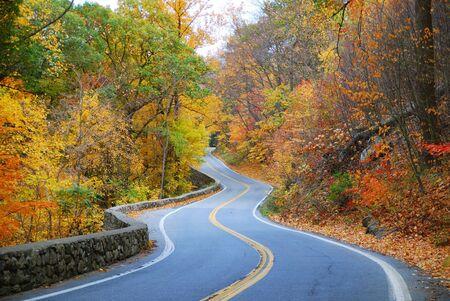 Tortuosa strada nel bosco di autunno con fogliame colorato albero in area rurale.