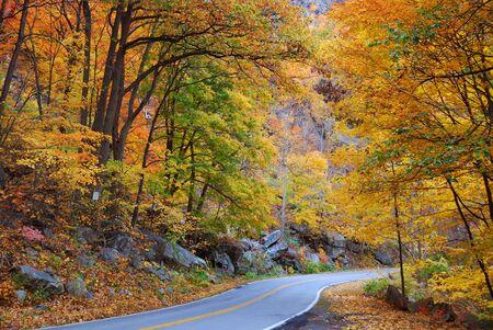 農村地域のツリー構造に多彩な群葉の秋の森で曲がりくねった道。 写真素材 - 8339508