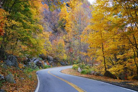 Winding road in Autumn woods with colorful foliage tree in rural area. Imagens