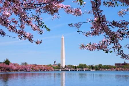 national landmark: Ciliegio in fiore e il monumento a Washington sul lago, Washington DC.