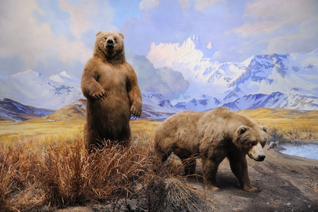 natural history museum: NEW YORK CITY - DEC 5: The American Museum of Natural History, with collections contain over 32 million specimens, is one of the largest and most celebrated museums in the world. December 5, 2010 in Manhattan, New York City.  Editorial
