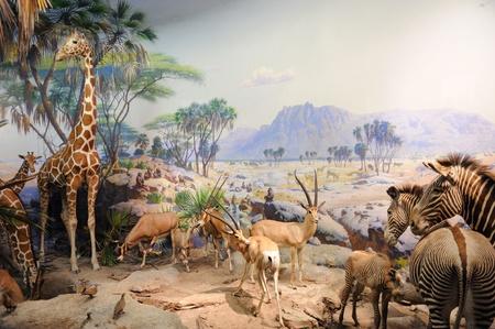 NEW YORK CITY - 5 december: Het American Museum of Natural History, met collecties bevatten meer dan 32 miljoen exemplaren, is een van de grootste en meest gevierd musea ter wereld. 5 December 2010 in Manhattan, New York City.  Redactioneel