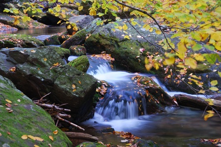 brooks: Autumn creek closeup with yellow maple trees and foliage on rocks in forest with tree branches.