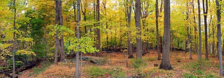 Bear Mountain forest panorama with colorful Autumn foliage.