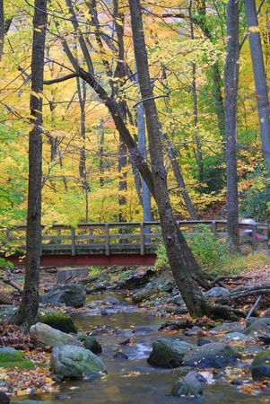Autumn forest with wood bridge over creek in yellow maple forest with trees and colorful foliage.  photo