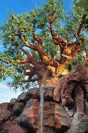 ORLANDO, FL - FEB 13: The Tree of Life in forest on February 13, 2012 in Orlando, Florida. Animal Kingdom is the largest single Disney theme park in the world covering more than 500 acres.