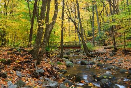 Herfst bos met houten brug over kreek in gele esdoorn bos met bomen en kleurrijke gebladerte. Stockfoto