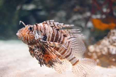 aquarian fish: Sea life from London Aquarian.  Stock Photo