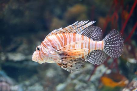 aquarian: Sea life from London Aquarian.  Stock Photo
