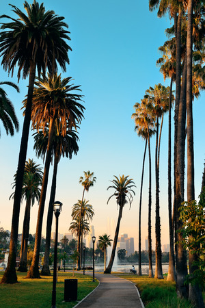 Los Angeles downtown park view with palm trees. photo