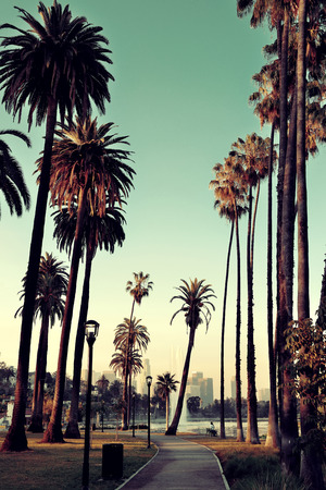 Los Angeles downtown park view with palm trees. Фото со стока - 31956886