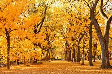 ミッドタウン マンハッタン ニューヨーク市のセントラル ・ パークの秋 写真素材