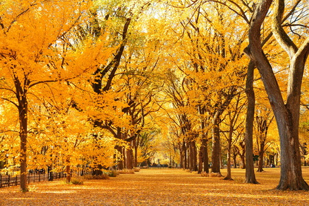 autumn in the park: Central Park Autumn in midtown Manhattan New York City