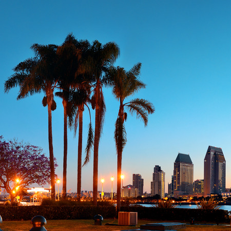 San Diego dawn in early morning with palm tree silhouette. Stok Fotoğraf - 31957183