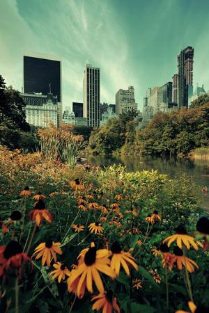 city park skyline: Central Park Spring flower with skyline in midtown Manhattan New York City Stock Photo