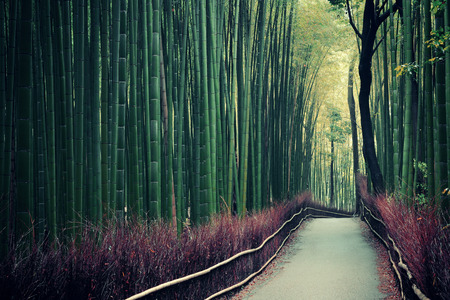Bamboo Grove in Arashiyama, Kyoto, Japan. Stock Photo