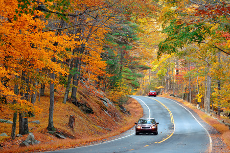 forest road: Autumn foliage in forest with road. Stock Photo