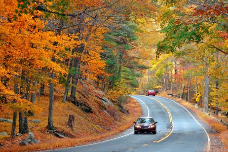 Herbstlaub im Wald mit Straße.