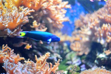 aquarian: Sea life from London Aquarian.
