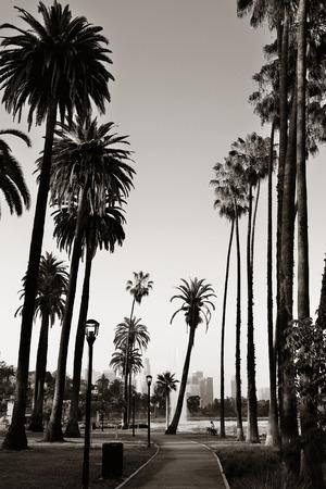arboles blanco y negro: Los Angeles con vistas al parque de la ciudad con palmeras.