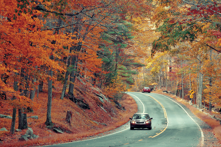 foliage: Autumn foliage in forest with road. Stock Photo