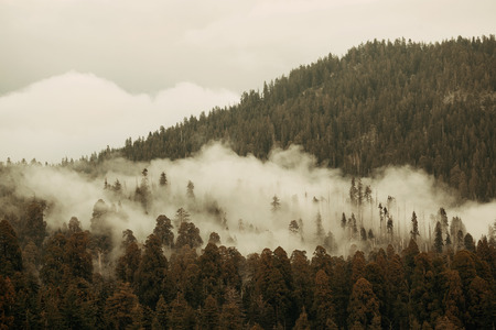 kings canyon national park: Mountain with fog and cloud in Sequoia National Park Stock Photo