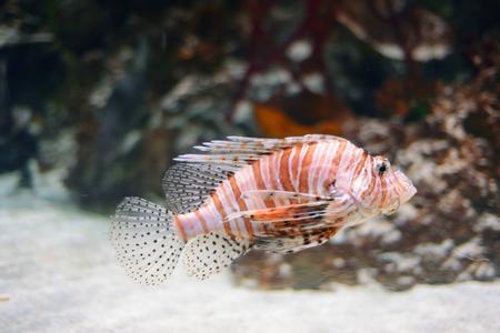 aquarian fish: Sea life from London Aquarian.