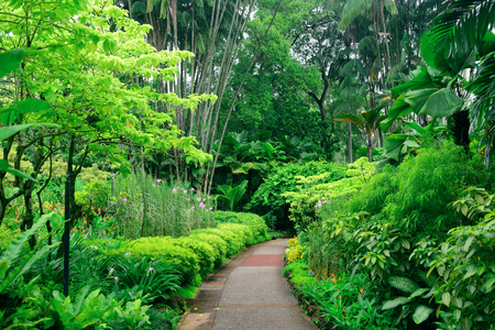 garden city: Green plants in Singapore Botanic Gardens Stock Photo