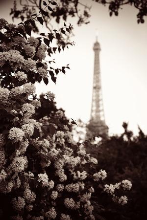 white metal: Eiffel Tower and flower in garden in Paris