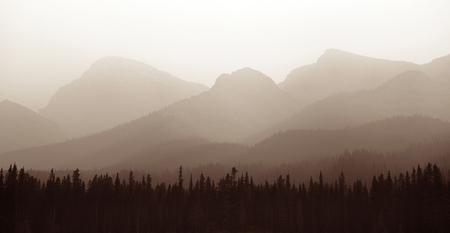 banff: Foggy mountain forest in Banff National Park.