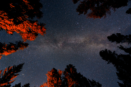 nighttime: Milky Way in forest in Banff National Park Stock Photo