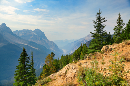 banff national park: Mountain top view with forest and cloud in Banff National Park. Stock Photo