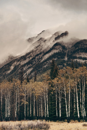 Banff national park foggy mountains and forest in Canada. 스톡 콘텐츠