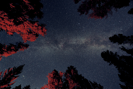 banff national park: Milky Way in forest in Banff National Park Stock Photo