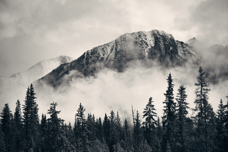 Banff national park foggy mountains and forest in Canada. 免版税图像