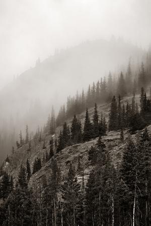 banff: Misty mountain in Banff National Park