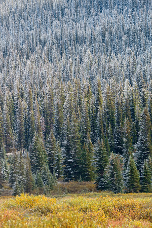 banff national park: Snow trees in Banff National Park Stock Photo