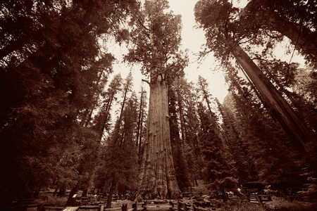 general: General Sherman Tree in Sequoia National Park Stock Photo