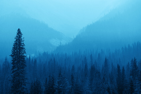 foggy: Foggy mountain forest in Banff National Park.