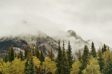 foggy: Banff national park foggy mountains and forest in Canada. Stock Photo