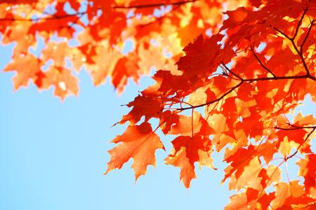 feuillage d'automne dans la région de la Nouvelle-Angleterre.
