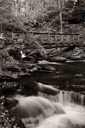 glen: Waterfalls in woods in black and white.