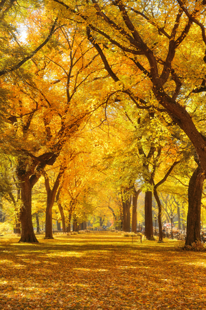 Woods and Autumn foliage in Central Park in midtown New York City