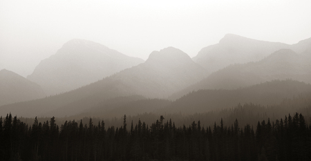banff national park: Foggy mountain forest in Banff National Park.