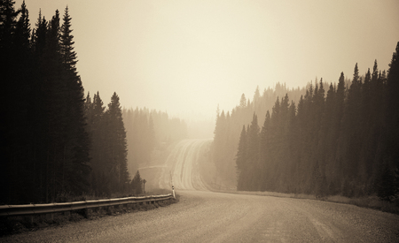 black forest: Foggy road in forest in Banff National Park