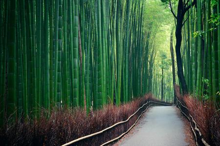 Bamboo Grove in Arashiyama, Kyoto, Japan. 版權商用圖片